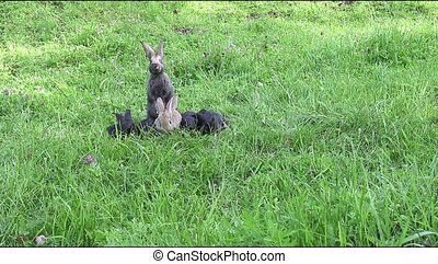 The rabbits running around the lawn and eat grass