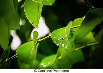 the rain drop on the leaves