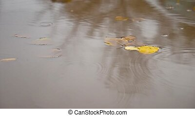 the rain in the fall in a nature puddle of yellow leaves...
