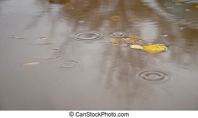 the rain in the fall in a puddle nature of yellow leaves...