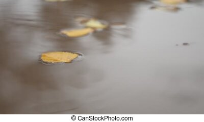 the rain in the fall in a puddle of yellow leaves floating...