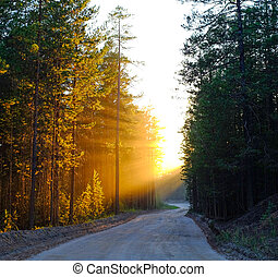 The rays of the sun at sunset breaking through a turn in the road, and tree branches