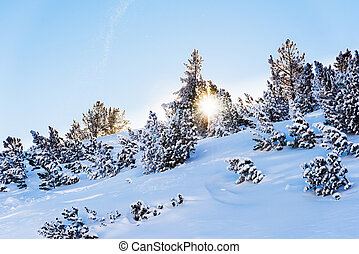 the rays of the sun Christmas tree covered with snow