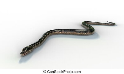 The realistic snake 3d animation attack bike forward to camera on white background with 3d rendering.