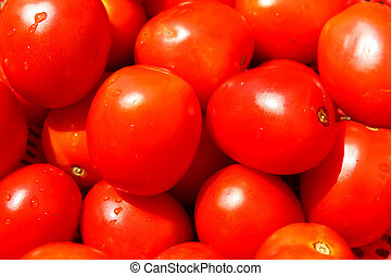 The red ripe tomatoes