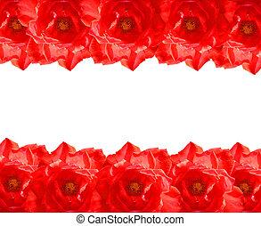 The Red Rose frame