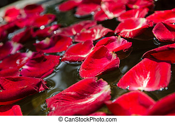 The red rose petal is floating on water