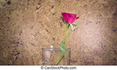 the red rose slowly falls in a vase and bouncing, slow motion