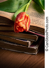 The red tulip on the old books