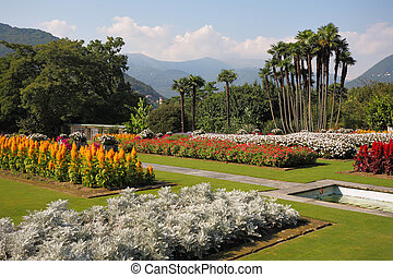 The red, yellow and white flowers and palms