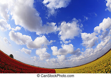 The red - yellow flower field