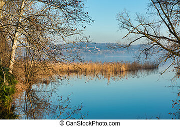 The reed bed on the lake of Varese with a hill in the...