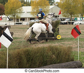 The Refusal - A horse refusing a jump after coming out of...