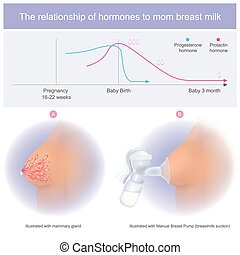 The relationship of hormones to mom breast milk - Mom can...