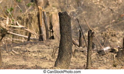 The remains of a cut tree - A hand held, close up shot of...