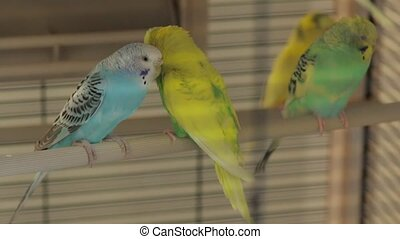 The Rests Parrots the Cage - The parrots the bird cage