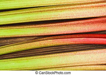 The rhubarb close up