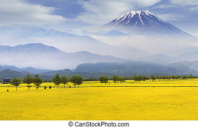 Rice paddy has pathway with mountain background