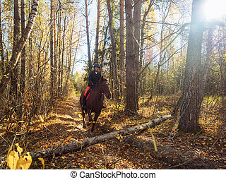 The rider on the red horse is preparing to jump over an obstacle in the autumn forest