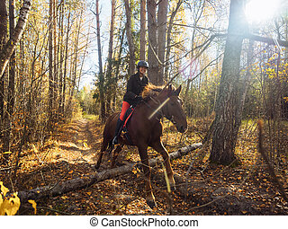 The rider on the red horse jumps over an obstacle in the autumn forest.