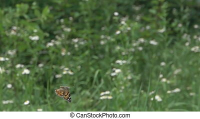 The rise of the butterflies - Rise, fly up, flight dynamics ...