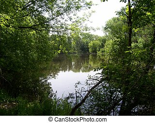The river in a wood