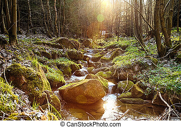 The river in the forest in the afternoon sun - HDR - The...