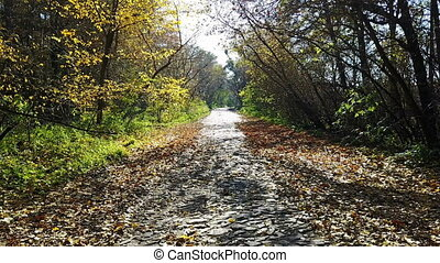 The road from the brick in the yellow autumn forest
