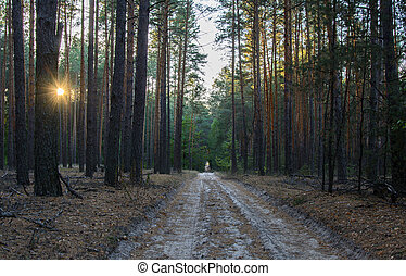 The road in a pine forest