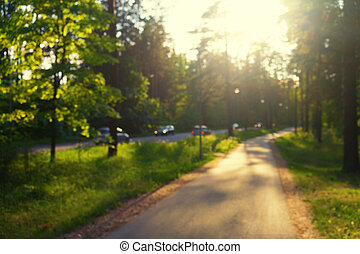 The road in the green forest on a sunny morning. Blurry
