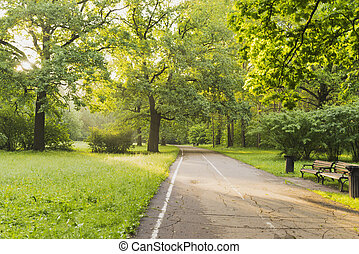 The road in the Park on a Sunny morning.