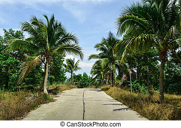 The road in the tropics surrounded by palm trees