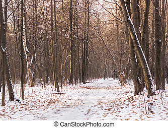 The road in the woods in winter.