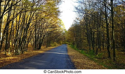 The road in the yellow autumn forest with alley