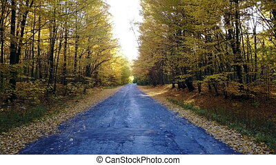 The road in the yellow autumn forest with police car
