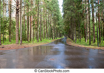 The road through the forest after the rain