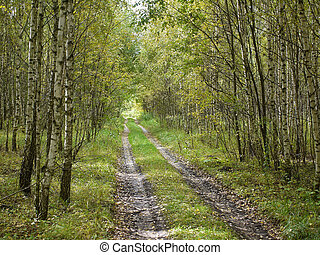 The road through the forest