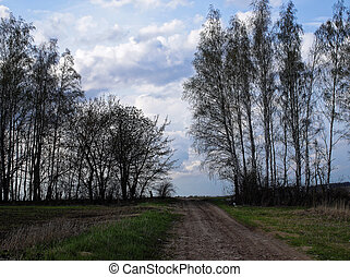 The road through the land with birch trees