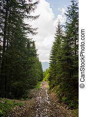 The road through the wood, Carpathians