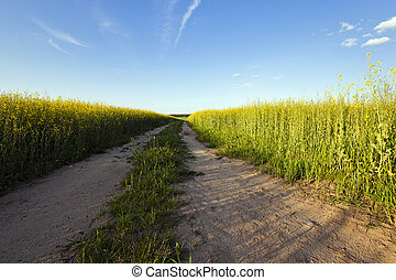 the road to a field