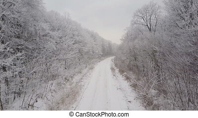 the road to the frosty forest