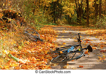 the road was covered with fallen yellow leaves, two bikes are on the road