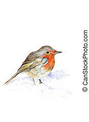 Hand drawn illustration of a robin against a white background..