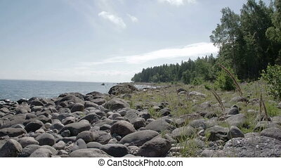 The rocky shore of the sea near the forest with lots of trees