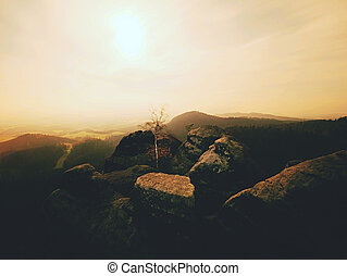 The rocky with tree. Full moon night in a beautiful mountain. Sandstone peaks and hills increased from fog