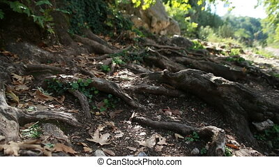 the roots of a tree outside