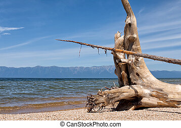 the roots of drift wood with a beautiful texture on the lake shore on a background of blue sky and mountains, Baikal lake Russia