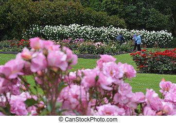 The Rose Garden of Palmerston North NZL - PALMERSTON NORTH,...