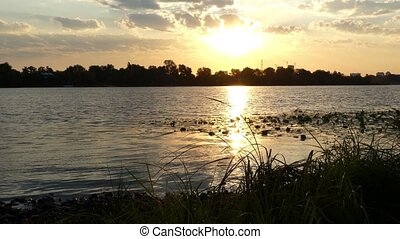 The Rough Riverbank Covered With Green Wetland, Cane, Bulrush, at Sunset in 4k