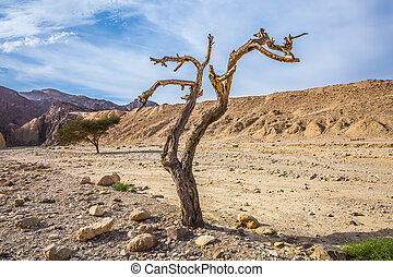 Fancifully curved dried tree